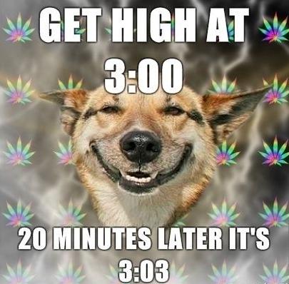 dog-weed-meme