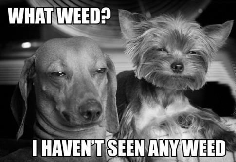 what-weed